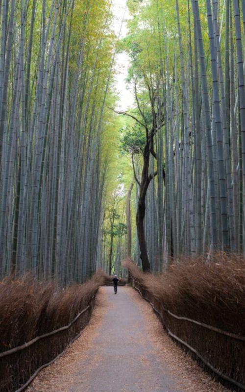 arashiyama resized
